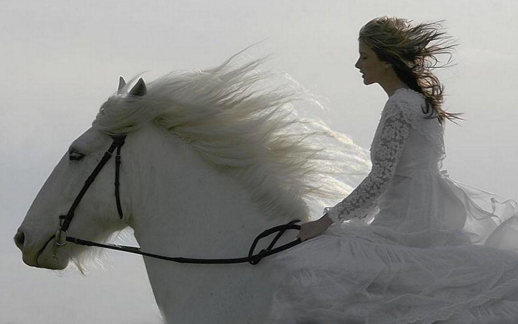 http://assetsro.tpu.ro/assets/users_profile/2010/08/15/579334/horse1456.jpg