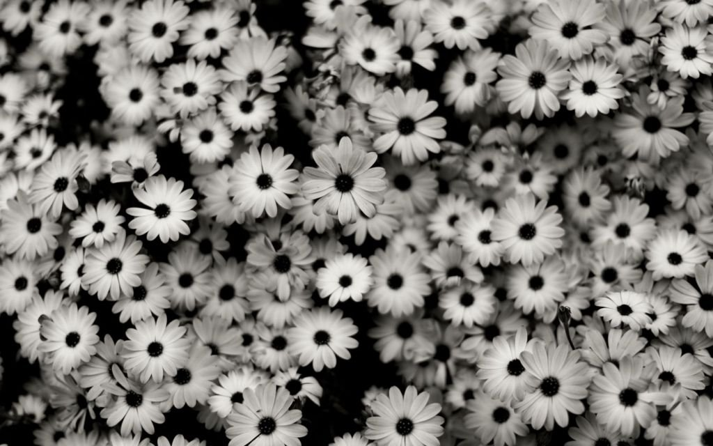 Картинки мелких цветов 6