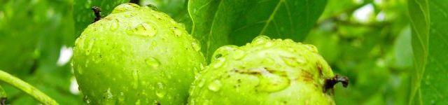 Cum se face dulceata de nuci verzi?