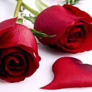 Rose_2860