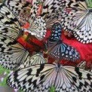 mybutterfly