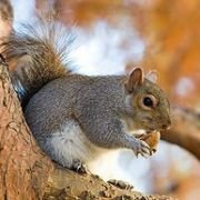 cutesquirrel20