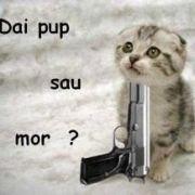 DaiPupSauMor