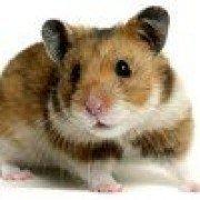 Hamsterica