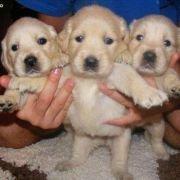 puppyeyesss