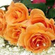 FlowerRoseRose