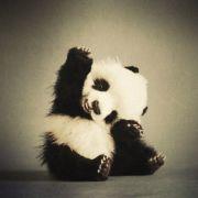 PandaGirl98