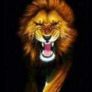 LionKiller7