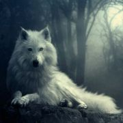 WolfGhost