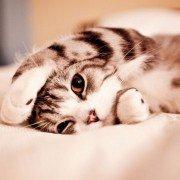 KittensMeow