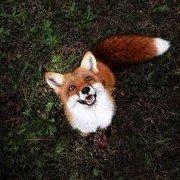 FoxyMyHero