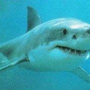 Sharker073