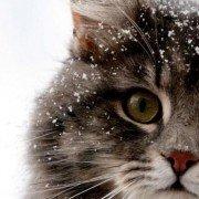 Kittylover2011